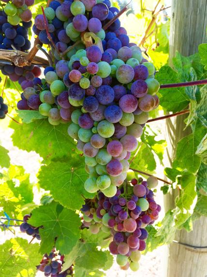 The Wonderful Westside Wine Trail Tour