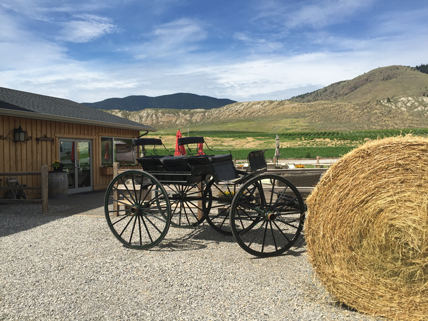 Take a wine tour in Kamloops with DiVine Tours!