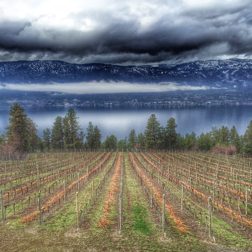 Wine Tour - Lake Country's Scenic Sips