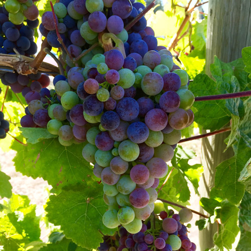 Wine Tour - Westside Wine Trail